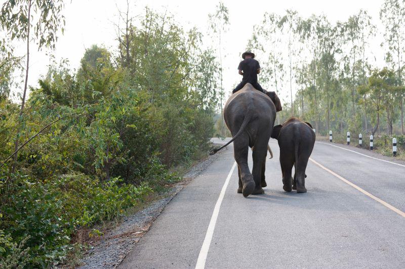elephantmomson.jpg