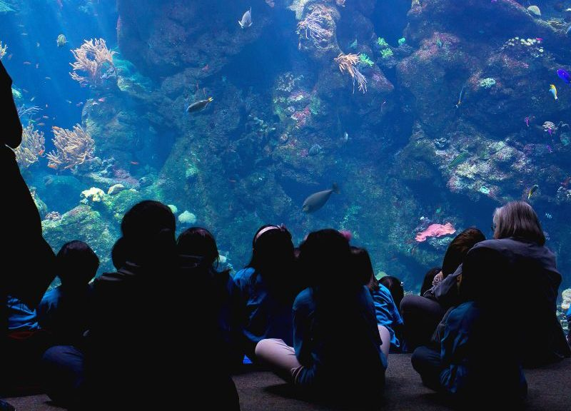 people-watching-aquarium-1113tm-pic-654.jpg