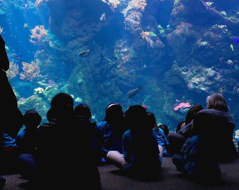 people-watching-aquarium-1113tm-pic-654.jpg
